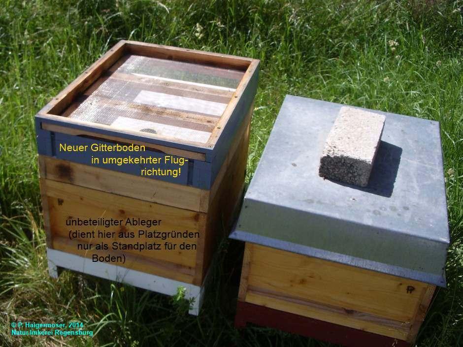 natur imkerei regensburg bienen als partner zum erhalt der natur. Black Bedroom Furniture Sets. Home Design Ideas