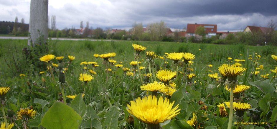 ... Uni Regensburg kann man die polnische Sprache und Kultur kennenlernen